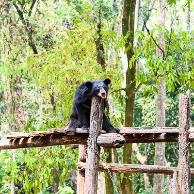Kouang Si Waterfall Luang Prabang Laos