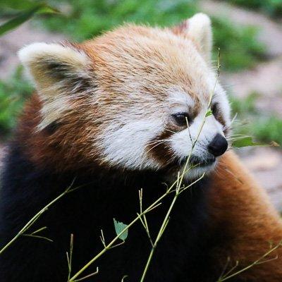 Research Base of Giant Panda Chengdu Sichuan China 2
